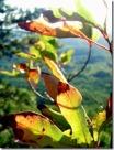 Autumnleaves_thumb.jpg