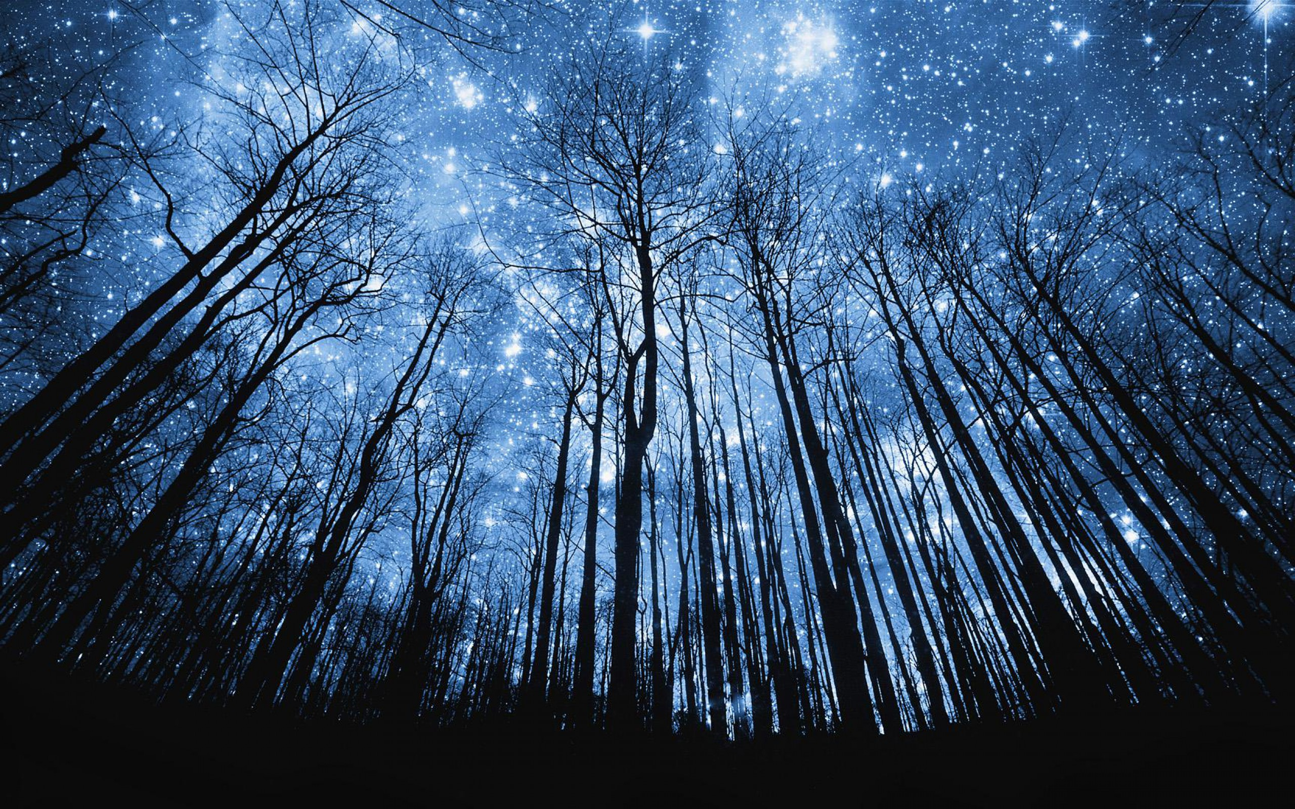 Starry Night Over The Forest Wallpaper 1072265