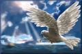 Animation_Dove-1
