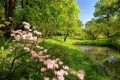 garden-of-eden1-620x418