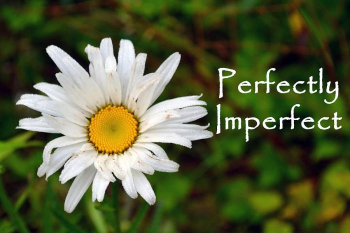 perfectly-imperfect-daisy-flower-beth-sawickie